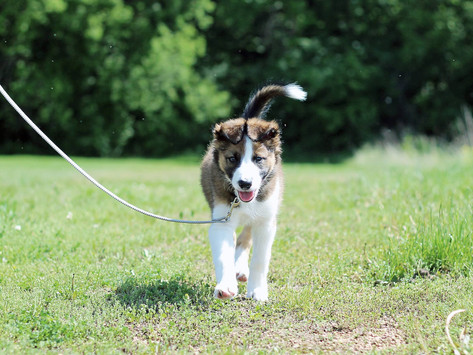 Frustrated with Your Dog? Here's a Secret that Dog Trainers Use!