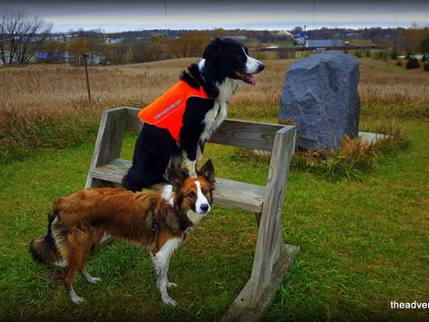 Off Leash Fun: One Mile Lake Nature Area - Fergus Falls, MN