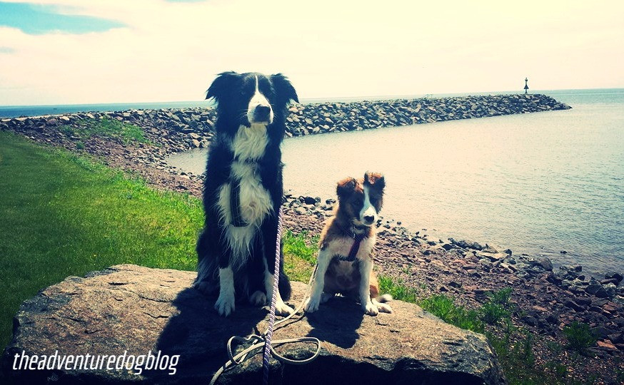 minnesota dogs