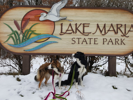 A Walk in the Woods: Lake Maria State Park in Monticello, MN
