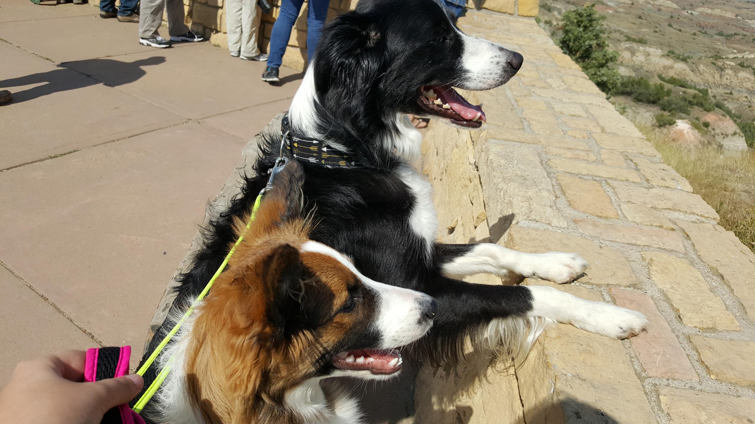 The Adventure Dog Blog!