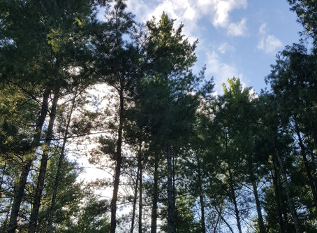 Snake River Campground in Chengwatana State Forest. Pine City, MN