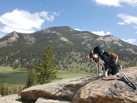 The Splendor of Rocky Mountain National Park Colorado