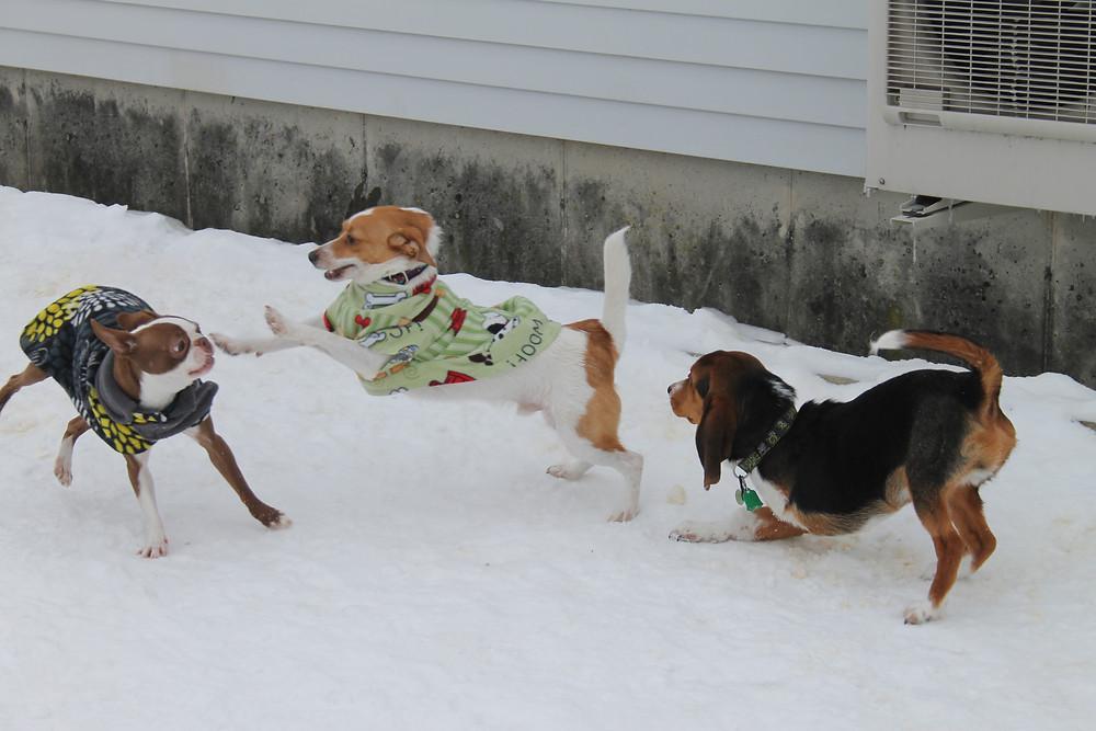 off leash dog playing friendly