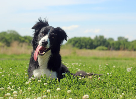 Frustration Tolerance - What To Do When Your Dog Loses His S**t