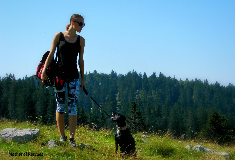 The Adventure Dog Blog | Tips