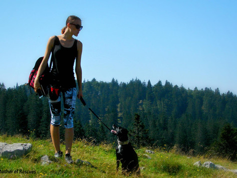 Hiking With a Fearful / Reactive Dog - From Mother of Rescues
