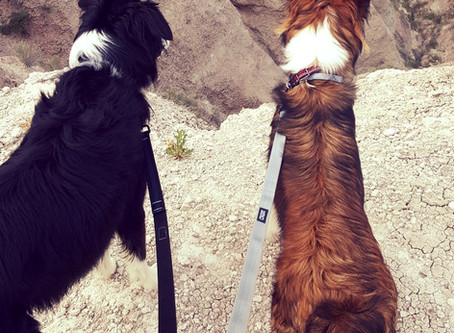Gear Review - Stunt Puppy Everyday Leash