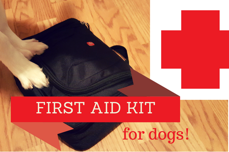 First Aid Kit for Dogs: Whacha Need