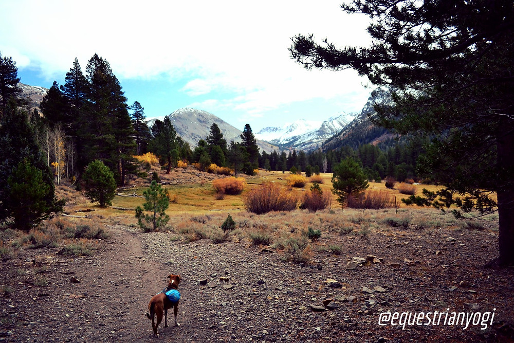hiking with dog in mountains