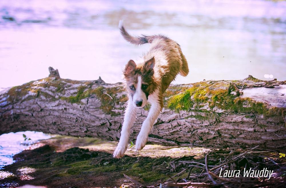 adventure dog blog