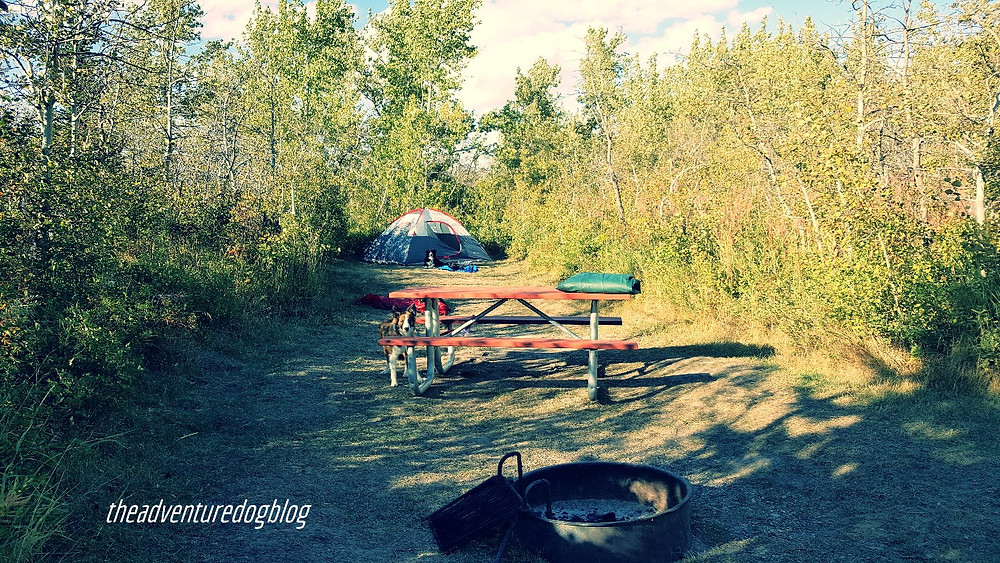 Campsite 8 at St Mary Campground, MT