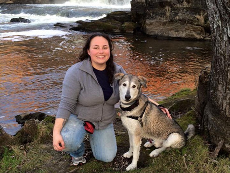 A Click Away Training Explains Off Leash Dog Encounters