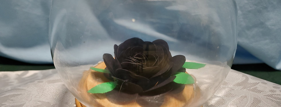Black rose under glass