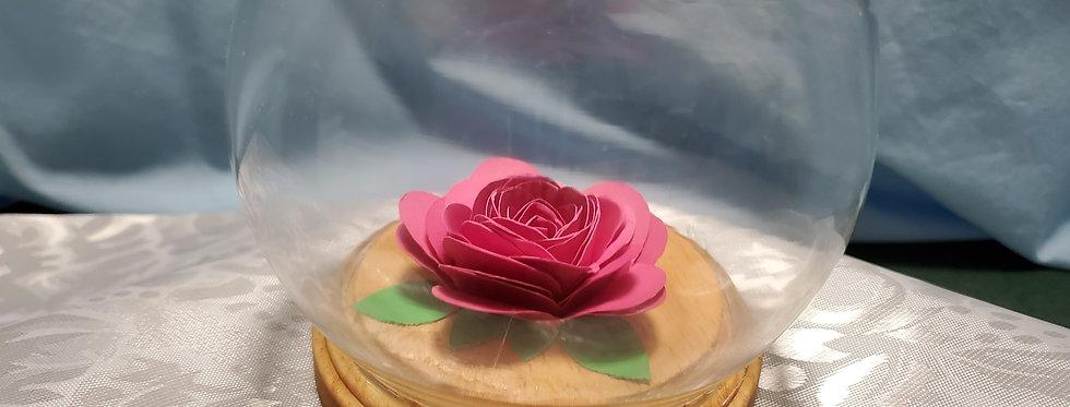 Hot pink rose under glass