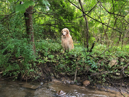 Matt, Brookie and I fishing Spruce Creek.