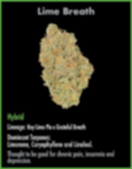 Lime Breath hybrid for wix_Lime Breath -