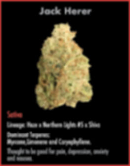 strain cards for wix March19_Jack Herer.