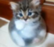 仕掛けてた猫ちゃんトラップに入ってる姿をなかなか撮る機会がなかったけど、ようやく
