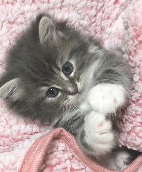 kitten4_edited.jpg