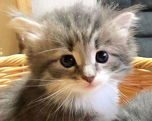 kitten4.jpg