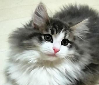 kitten_edited.jpg