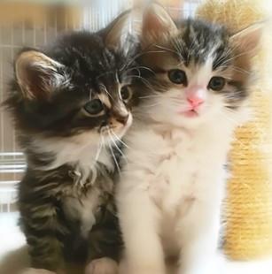 シャルル(右)とクロエ