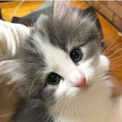 kitten3.jpg