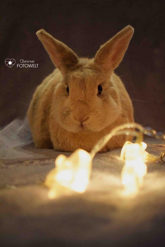 Kaninchen-Muffin.jpg