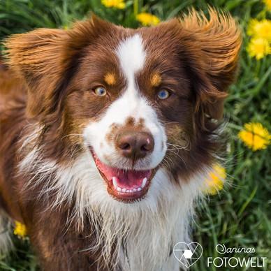 Hund -Mogli 15.jpg