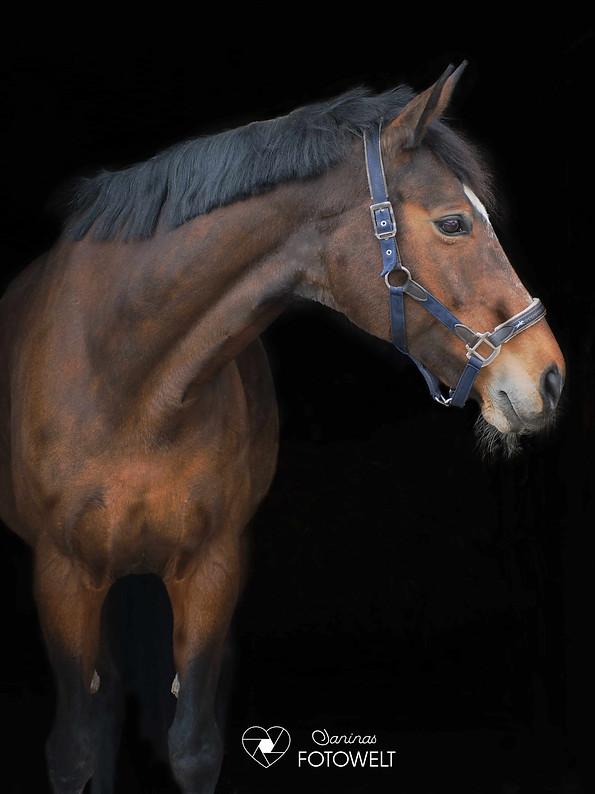 JaninasFotowelt Pferd Shooting schwarzer