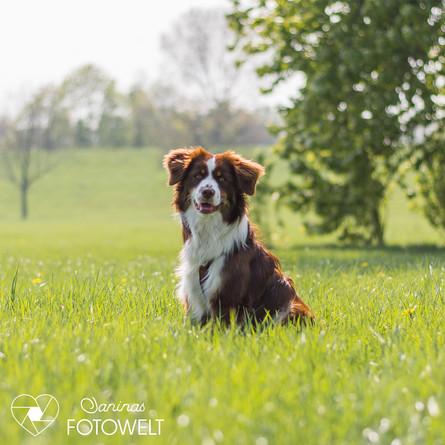 Hund -Mogli 1.jpg