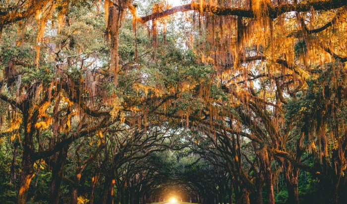 Sights, Sounds, and Tastes of America's Historic South