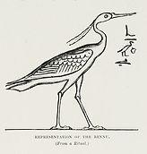457px-Representation_of_the_Bennu_(1878)