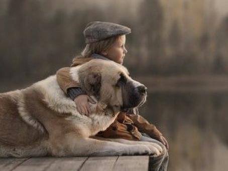 ¿Cómo despedir amorosamente a tu Mascota?