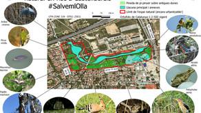 VALORS NATURALS, HÀBITATS I ESPÈCIES PROTEGIDES, EN PERILL A L'OLLA. #SELSHAANATLOLLA