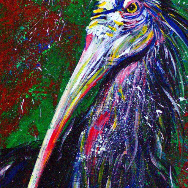 N° 22: Northern Bald Ibis