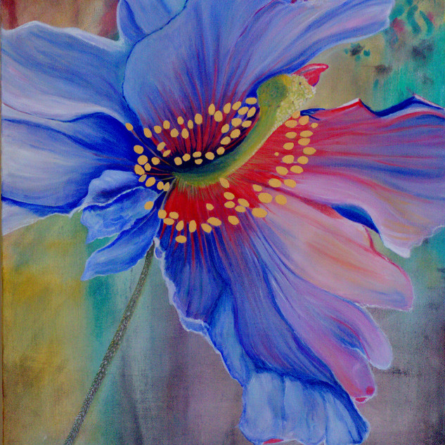 N° 28: Blue Poppy