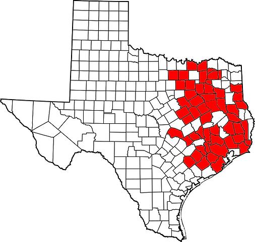 Texas Deirochelys.png
