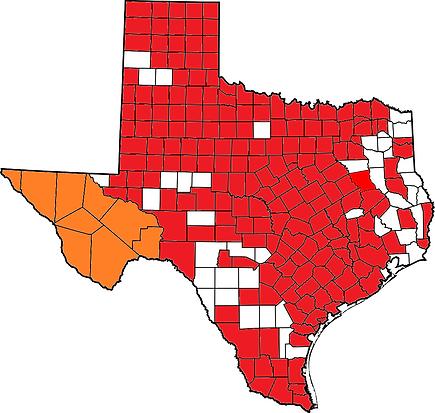 Texas T. ornata.png