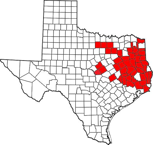 Texas S. carinatus.png