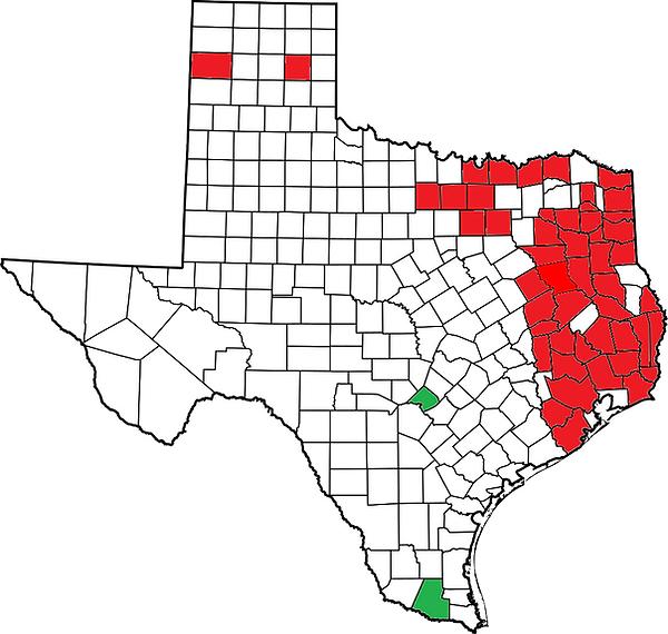 Texas P. concinna.png