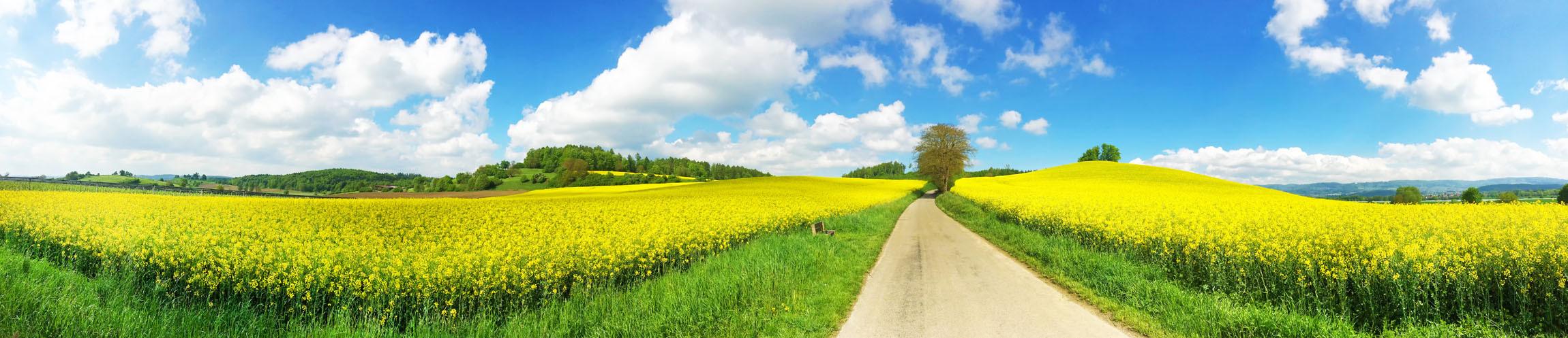 Panorama Foto Rapsfeld.jpg