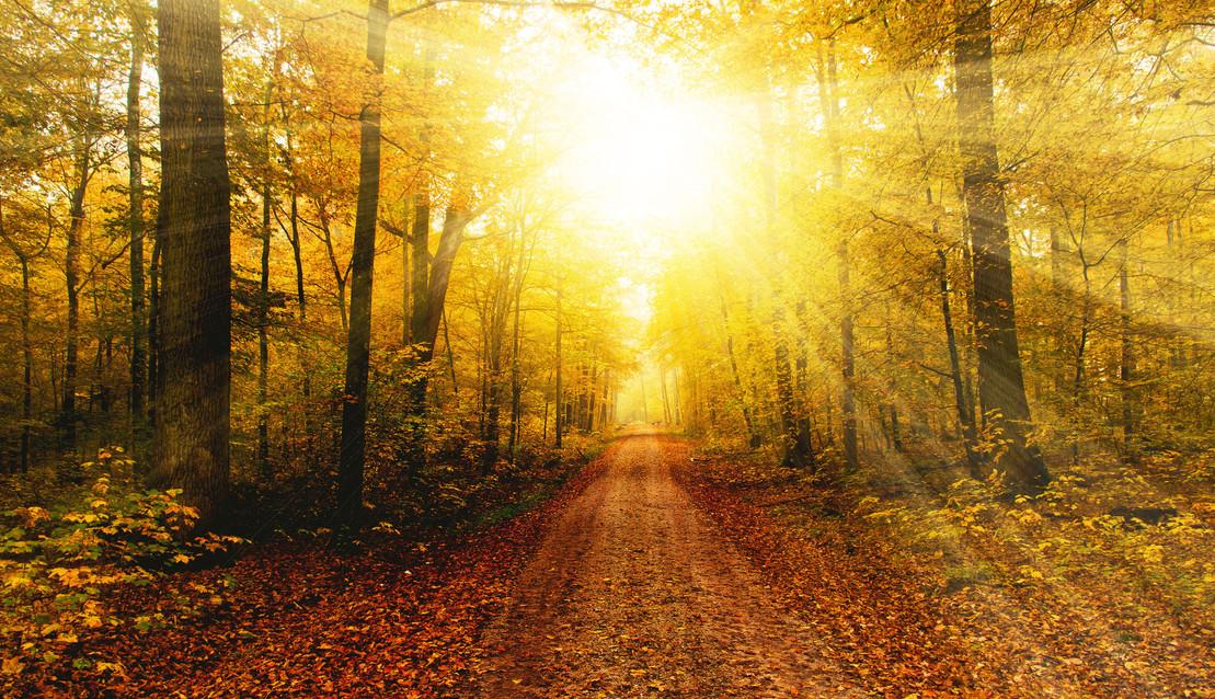 Waldweg im Licht 16 neu 2.jpg