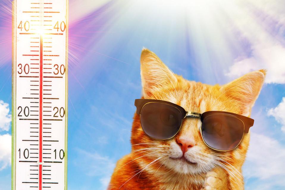 Katze Hitze 16 2.jpg