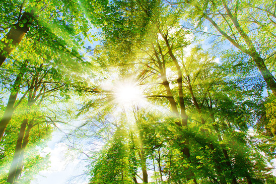Sun and Forest 15.jpg