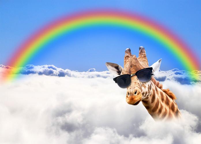 Giraffe Regenbogen 2 18.jpg