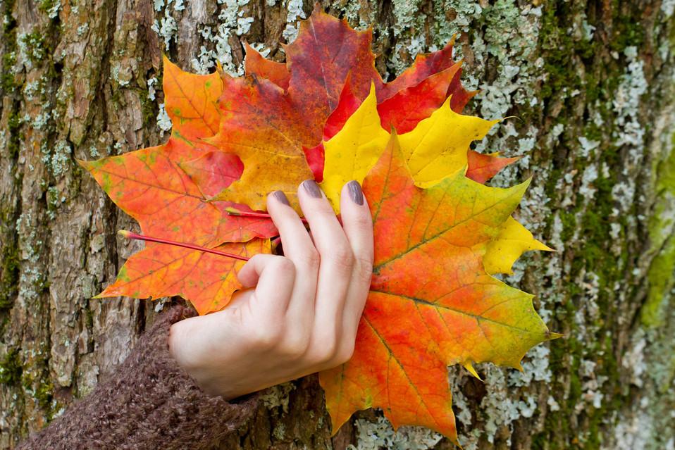 Melinda_Blätter_Hand_Baum.jpg