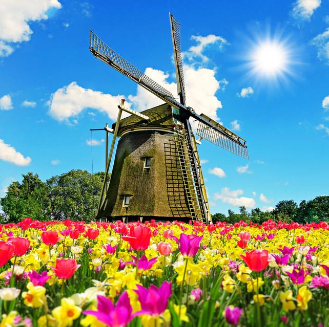 Holland Blumen 16 .jpg