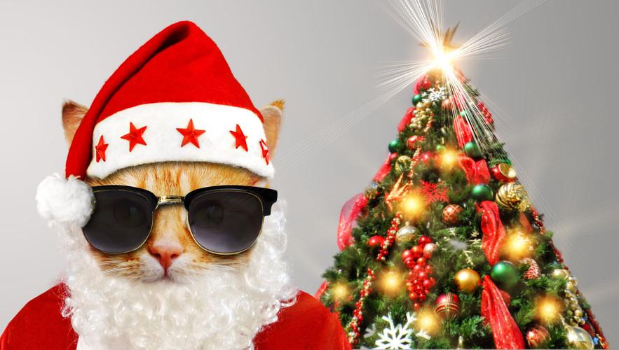 Katze Weihnachten 2 16.jpg